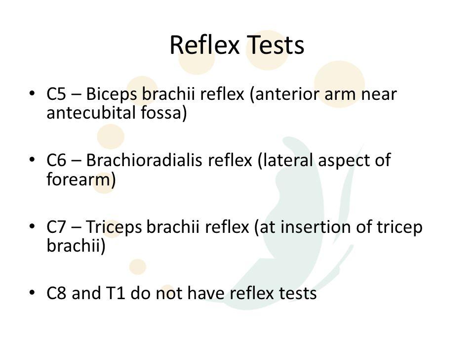 Reflex Tests C5 – Biceps brachii reflex (anterior arm near antecubital fossa) C6 – Brachioradialis reflex (lateral aspect of forearm)