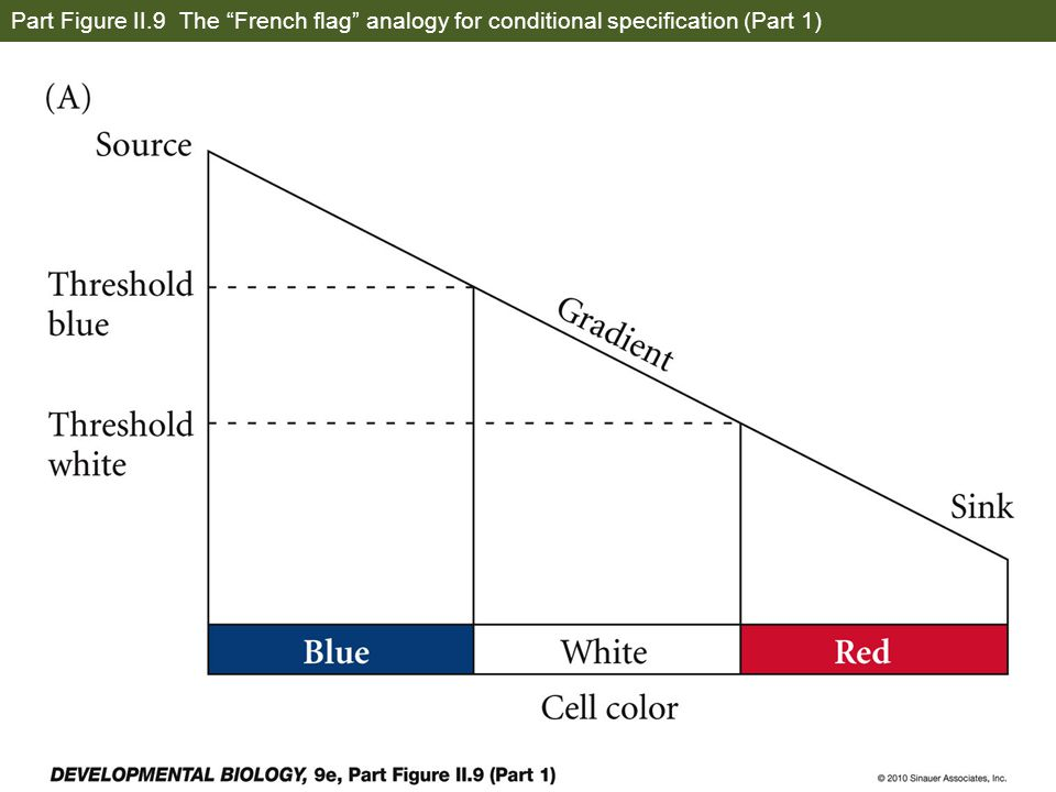 Part Figure II.9 The French flag analogy for conditional specification (Part 1)