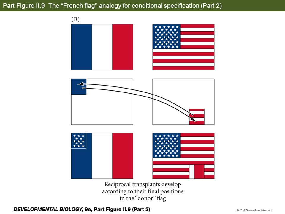 Part Figure II.9 The French flag analogy for conditional specification (Part 2)