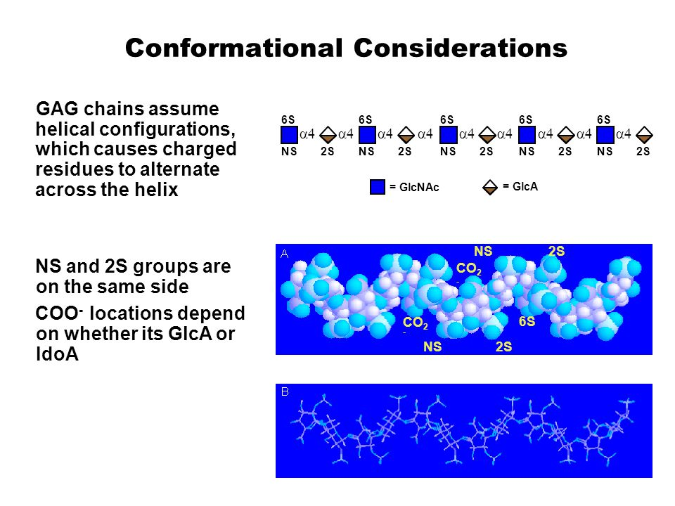 Conformational Considerations