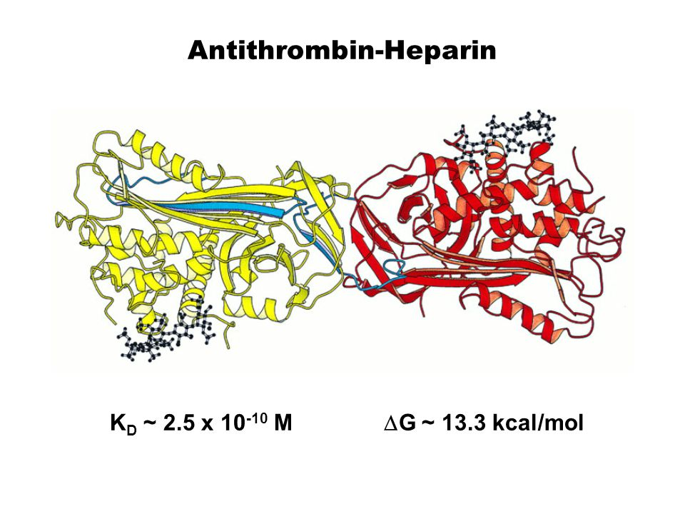 Antithrombin-Heparin