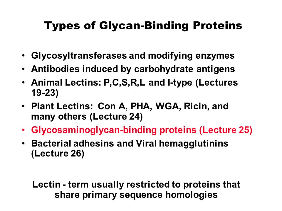 Types of Glycan-Binding Proteins