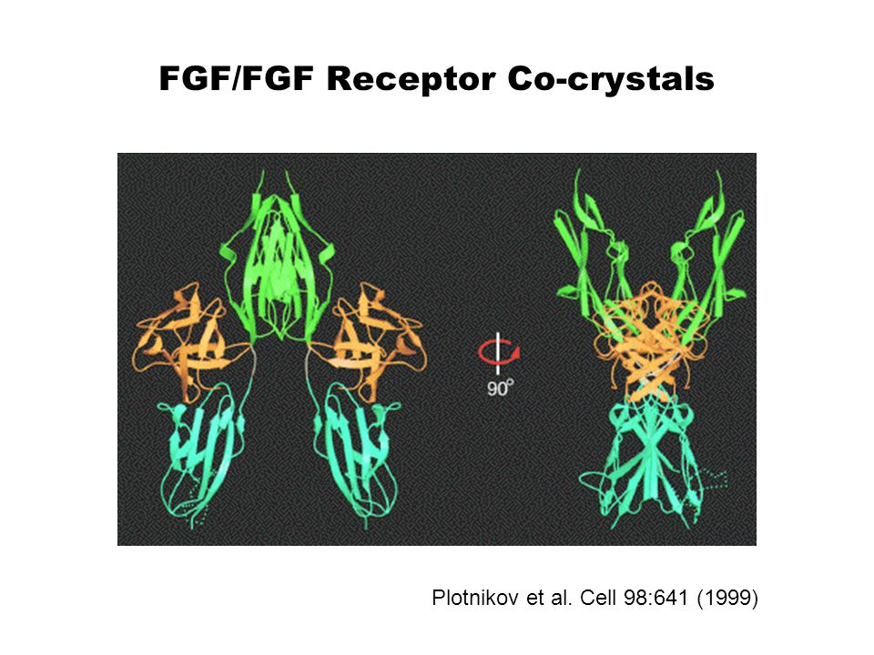 FGF/FGF Receptor Co-crystals