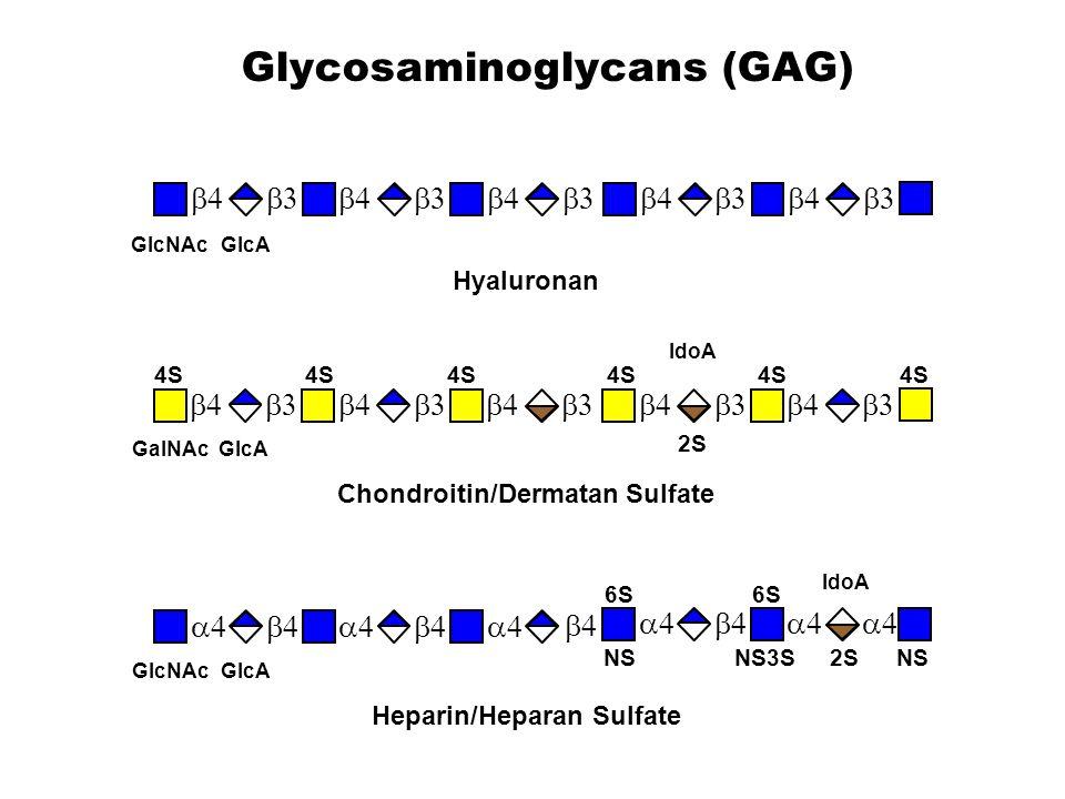 Glycosaminoglycans (GAG)