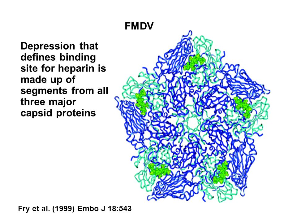 FMDV Depression that defines binding site for heparin is made up of segments from all three major capsid proteins.