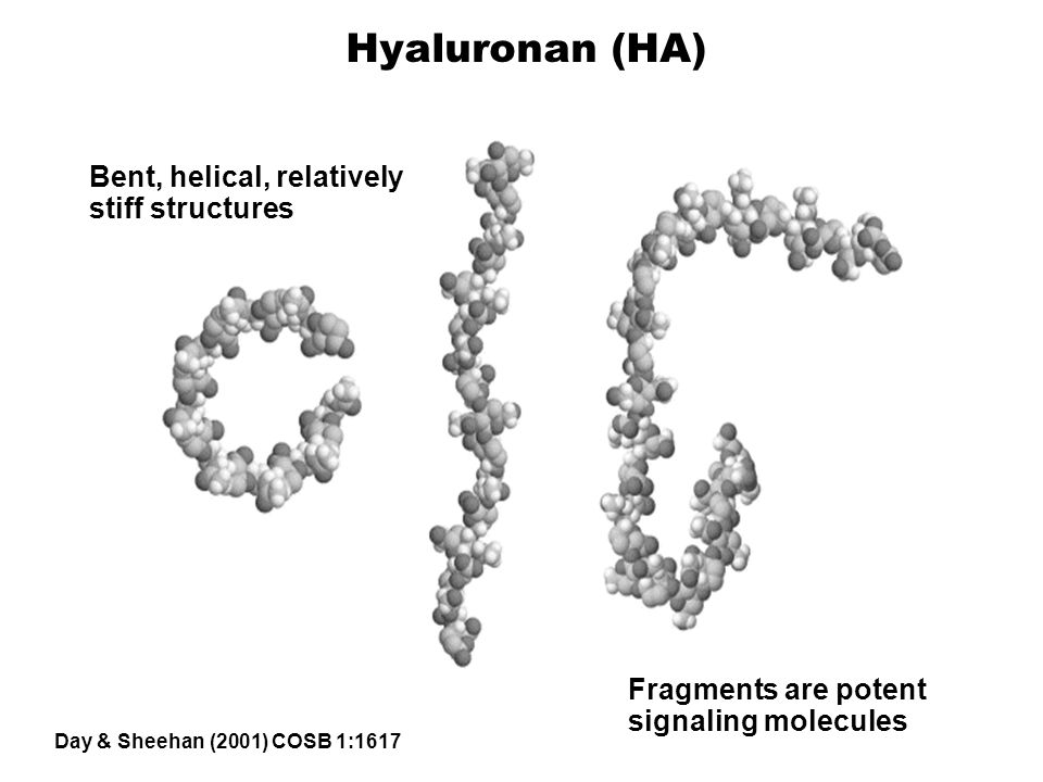Hyaluronan (HA) Bent, helical, relatively stiff structures