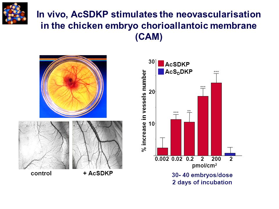 In vivo, AcSDKP stimulates the neovascularisation in the chicken embryo chorioallantoic membrane (CAM)