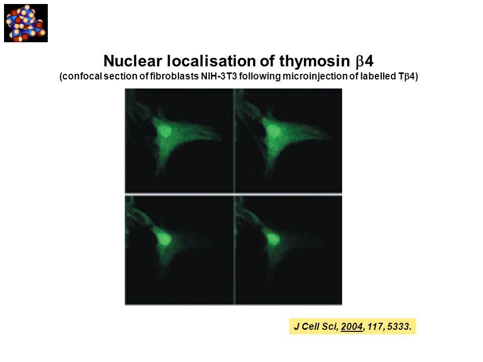 Nuclear localisation of thymosin b4