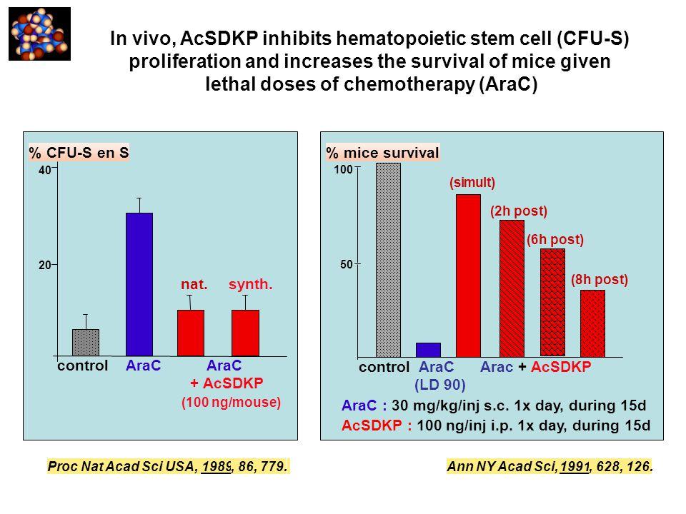 In vivo, AcSDKP inhibits hematopoietic stem cell (CFU-S)