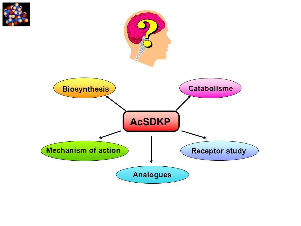 AcSDKP Biosynthesis Catabolisme Mechanism of action Receptor study