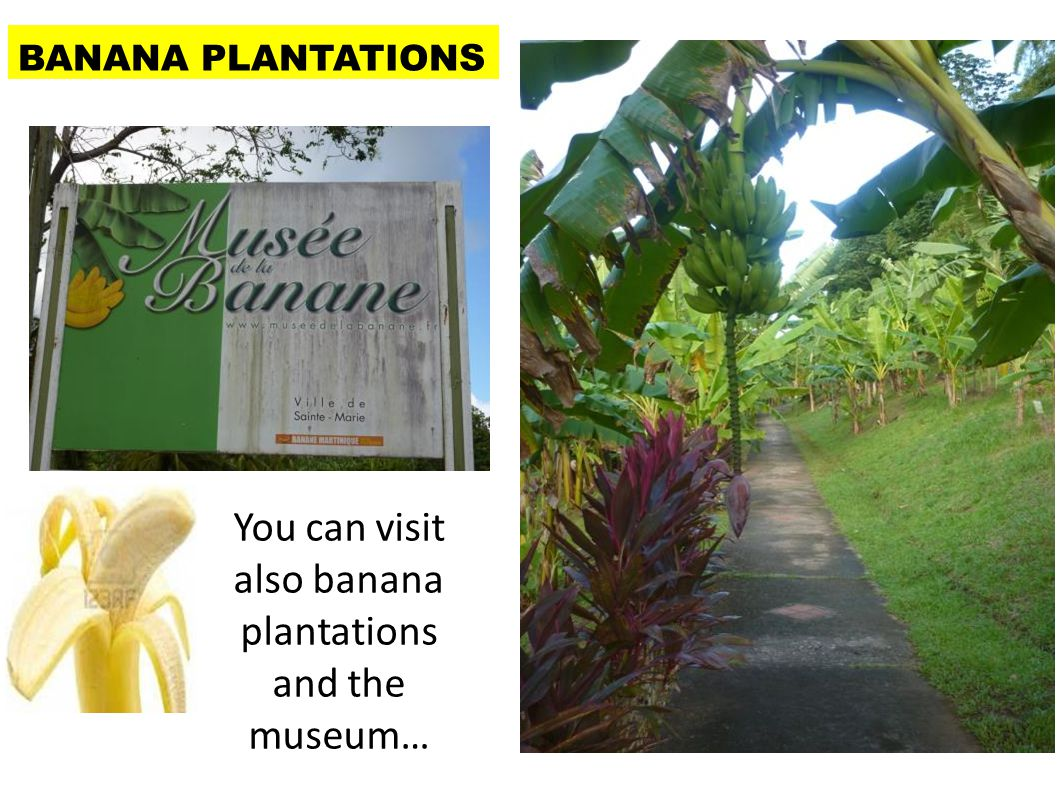 You can visit also banana plantations and the museum…
