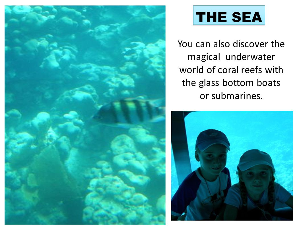 THE SEA You can also discover the magical underwater world of coral reefs with the glass bottom boats or submarines.