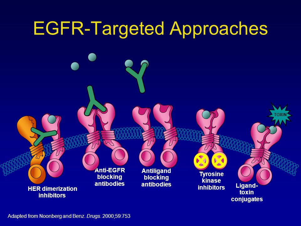 EGFR-Targeted Approaches