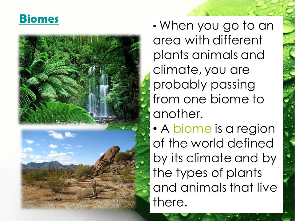 Biomes When you go to an area with different plants animals and climate, you are probably passing from one biome to another.