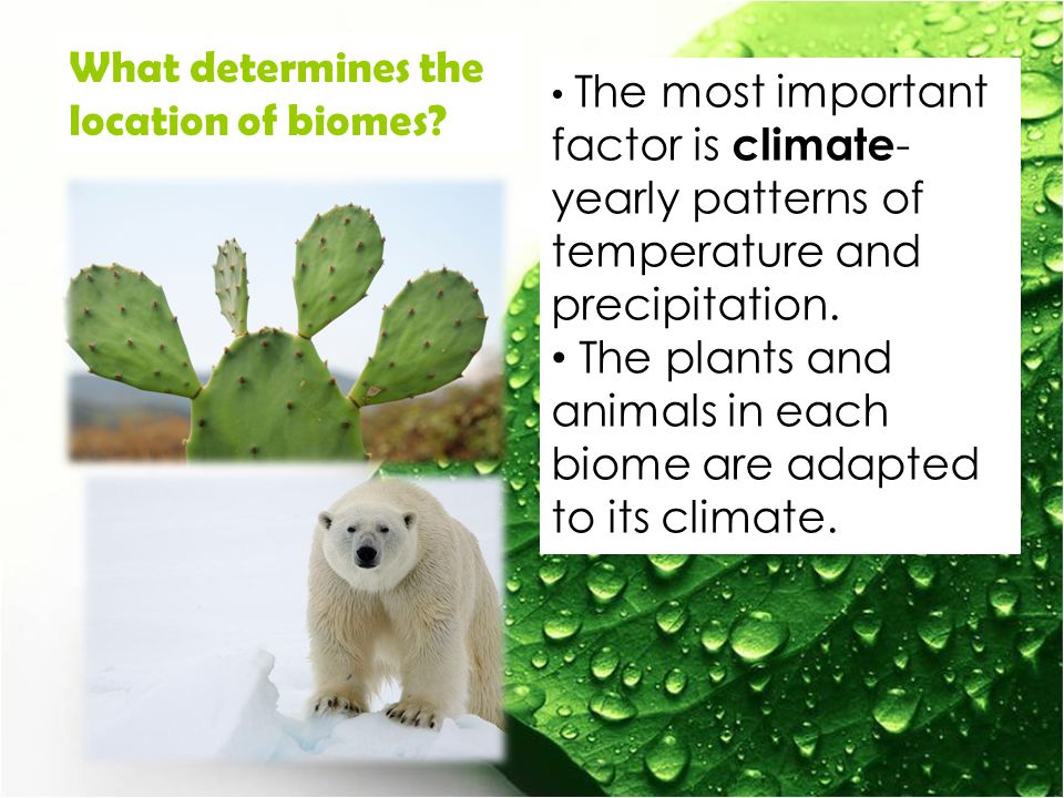 What determines the location of biomes