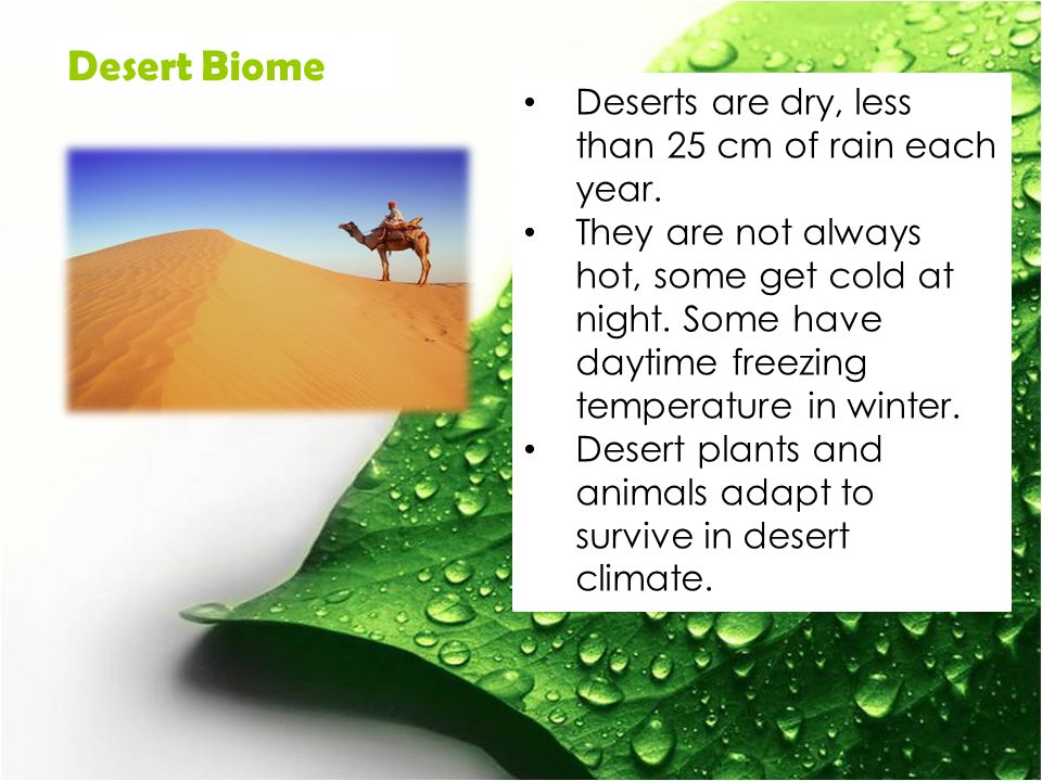 Desert Biome Deserts are dry, less than 25 cm of rain each year.