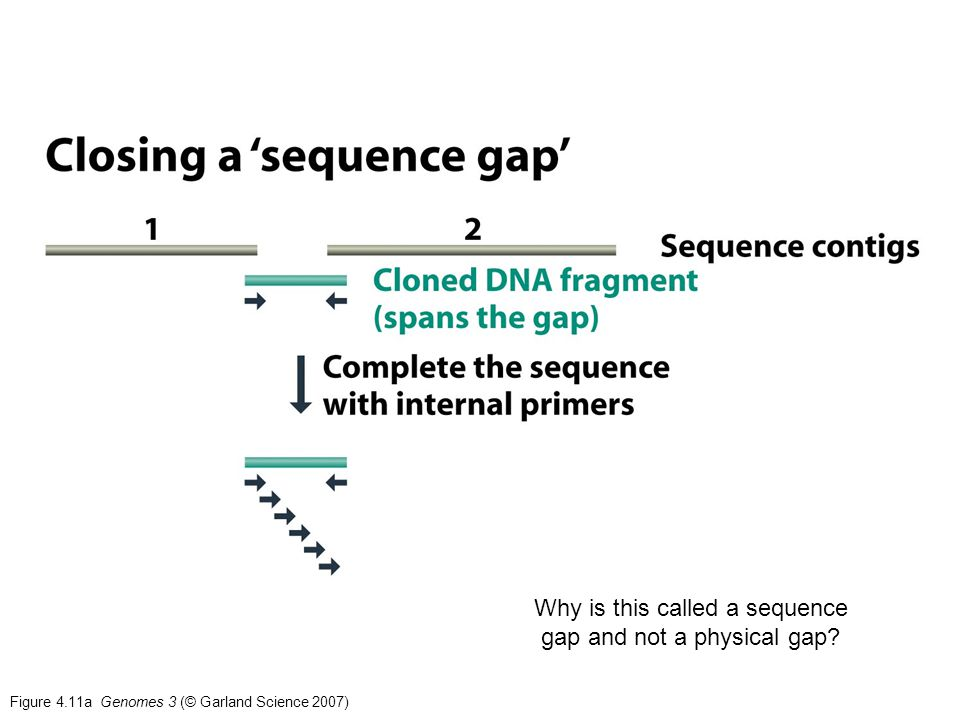 Why is this called a sequence gap and not a physical gap