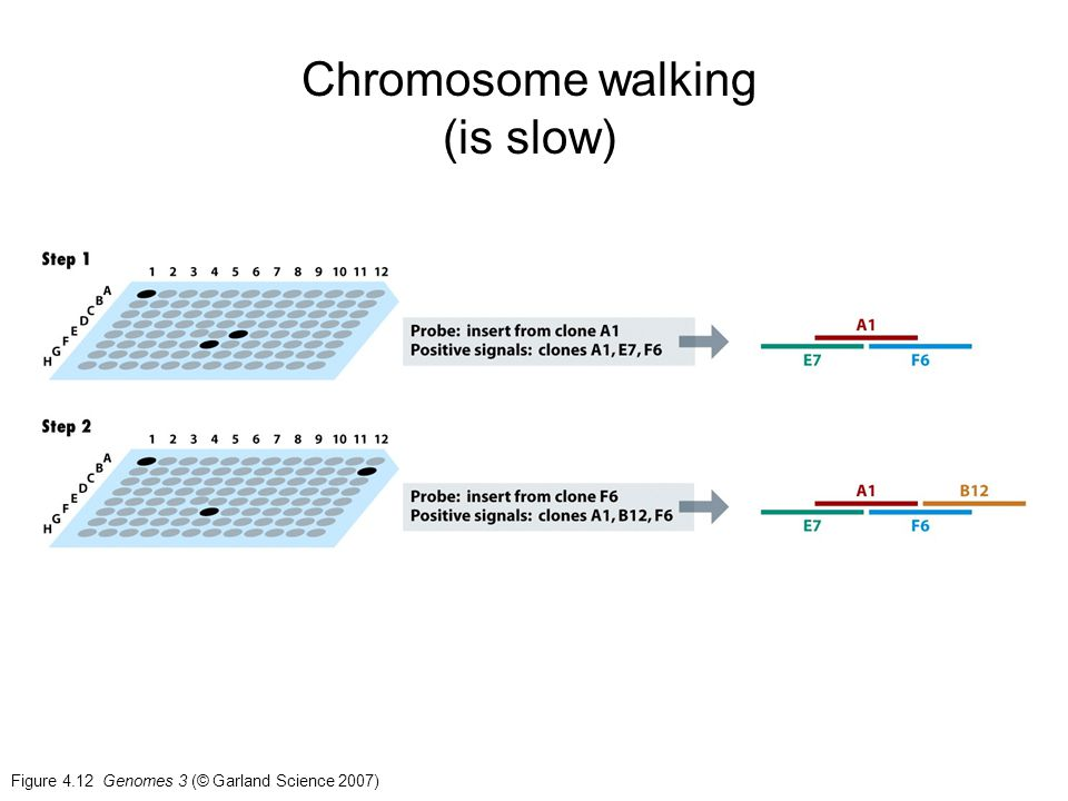 Chromosome walking (is slow)