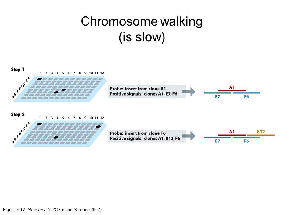 Chromosome walking (is slow)