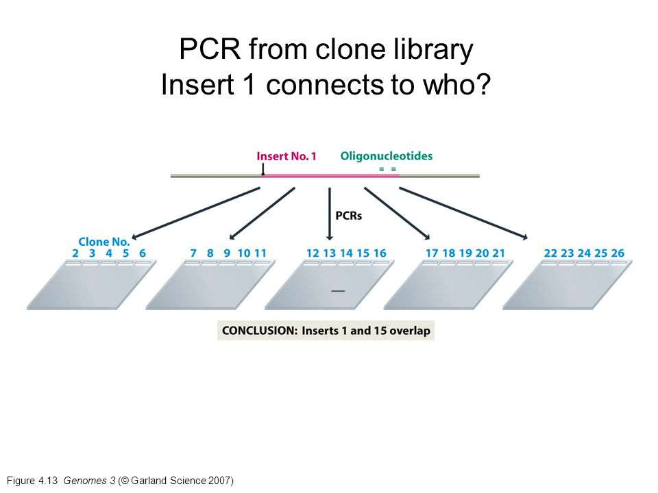 PCR from clone library Insert 1 connects to who