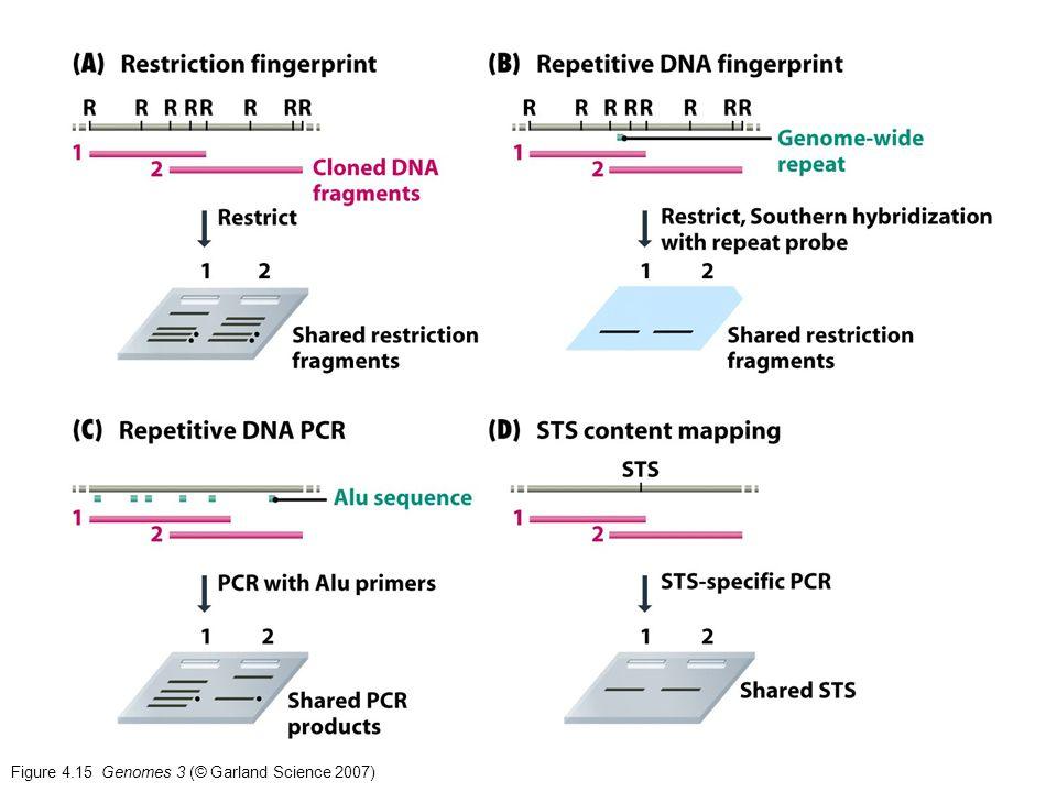 Figure 4.15 Genomes 3 (© Garland Science 2007)
