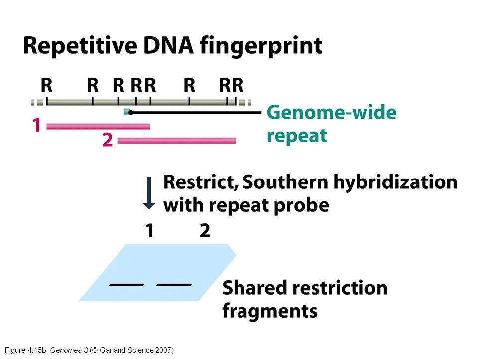 Figure 4.15b Genomes 3 (© Garland Science 2007)