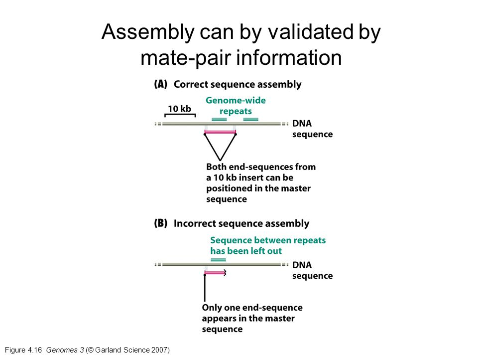 Assembly can by validated by mate-pair information