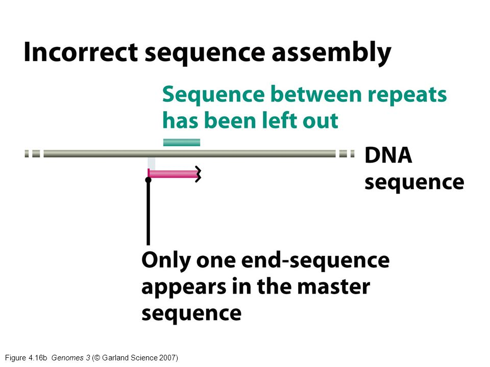 Figure 4.16b Genomes 3 (© Garland Science 2007)