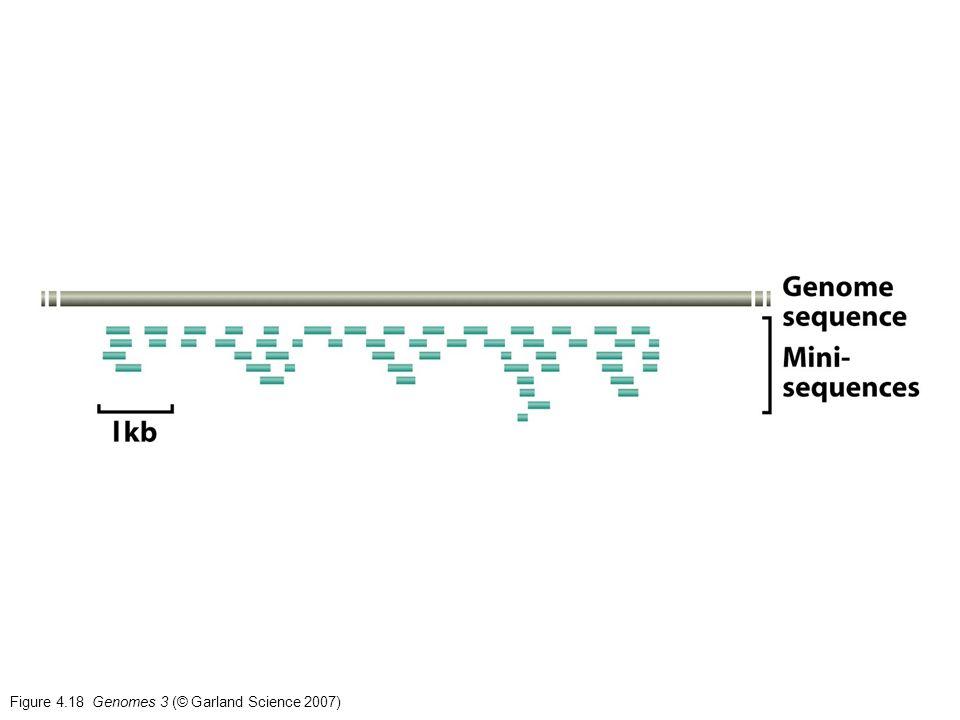 Figure 4.18 Genomes 3 (© Garland Science 2007)