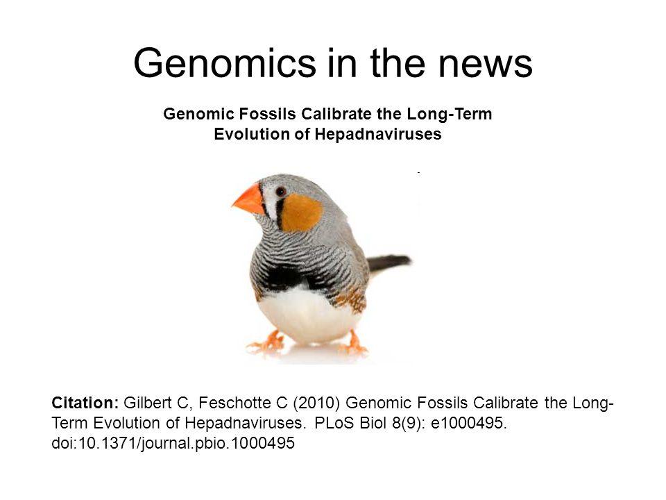 Genomic Fossils Calibrate the Long-Term Evolution of Hepadnaviruses