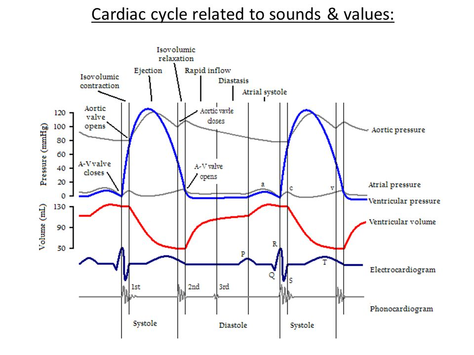 Cardiac cycle related to sounds & values: