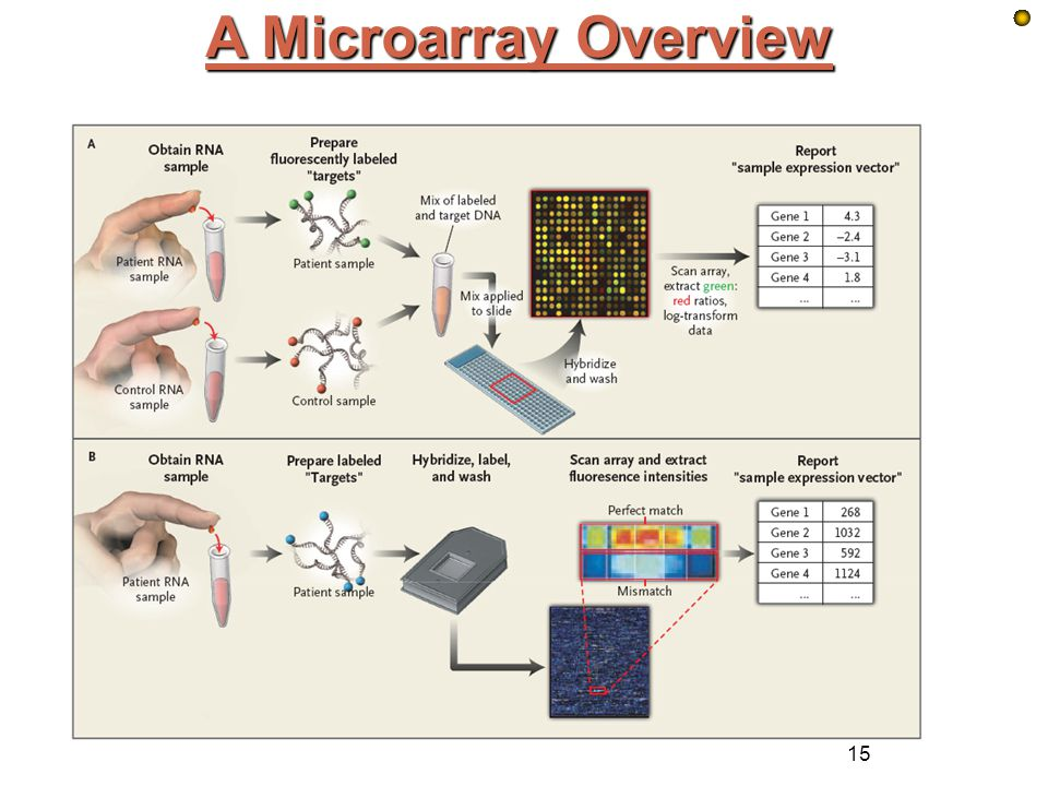 A Microarray Overview