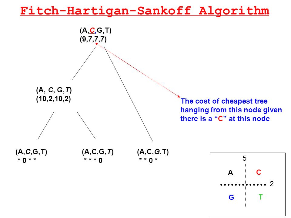 Fitch-Hartigan-Sankoff Algorithm