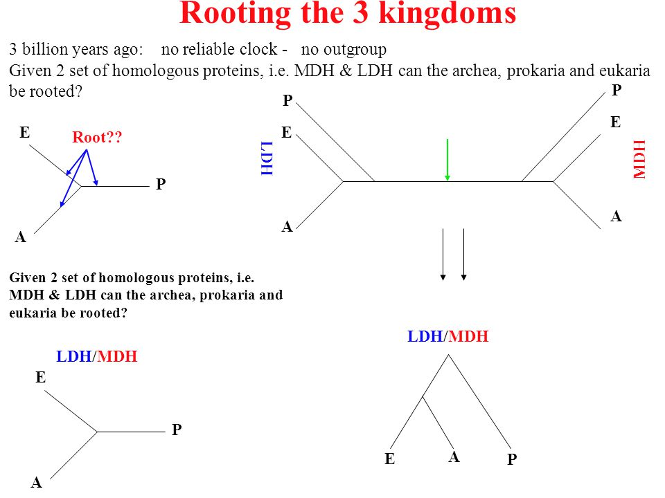 Rooting the 3 kingdoms 3 billion years ago: no reliable clock - no outgroup.