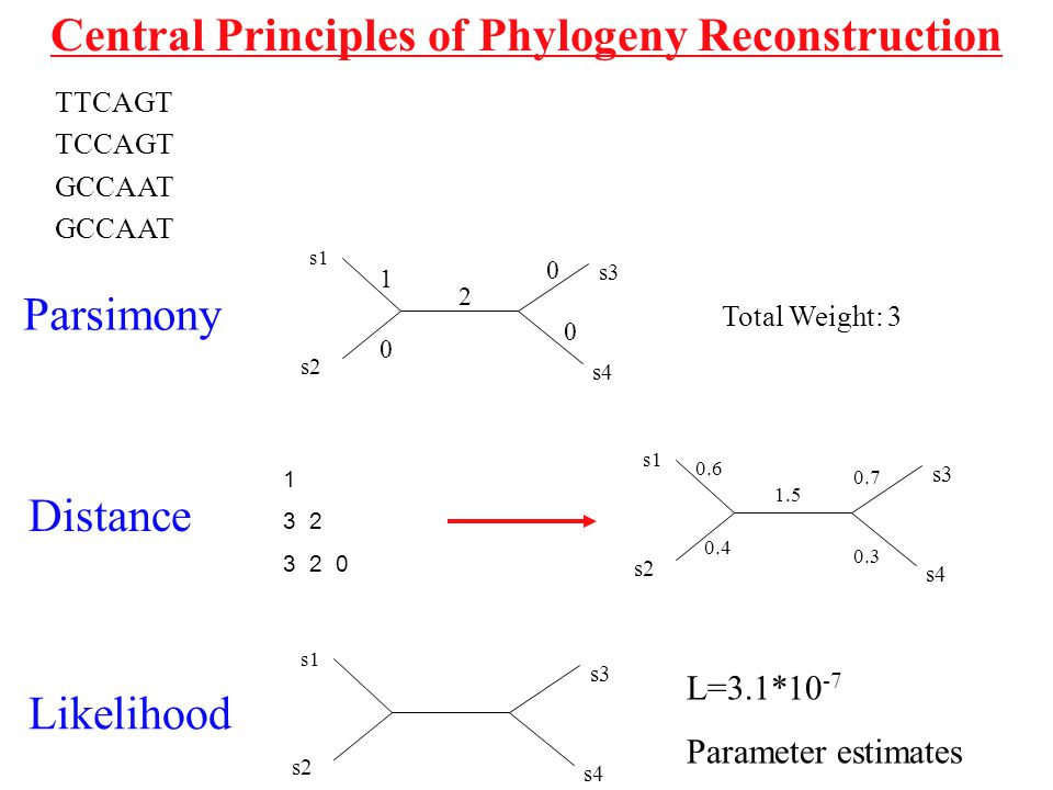 Central Principles of Phylogeny Reconstruction