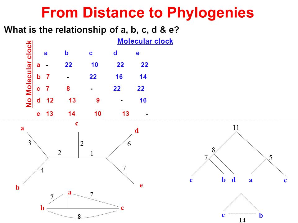 From Distance to Phylogenies