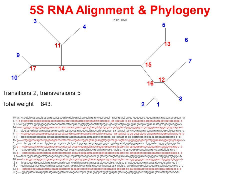 5S RNA Alignment & Phylogeny