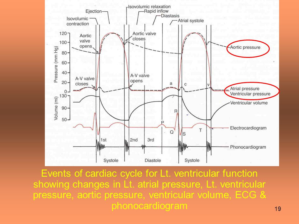 Events of cardiac cycle for Lt