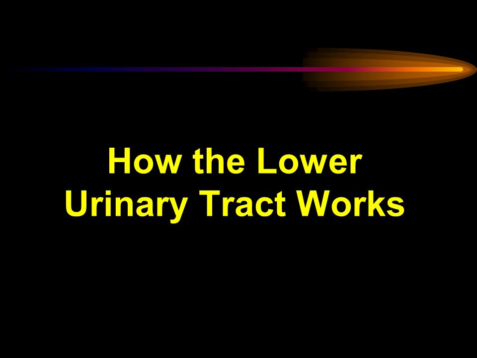 How the Lower Urinary Tract Works