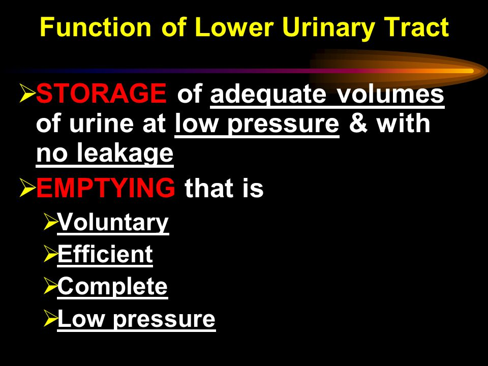 Function of Lower Urinary Tract