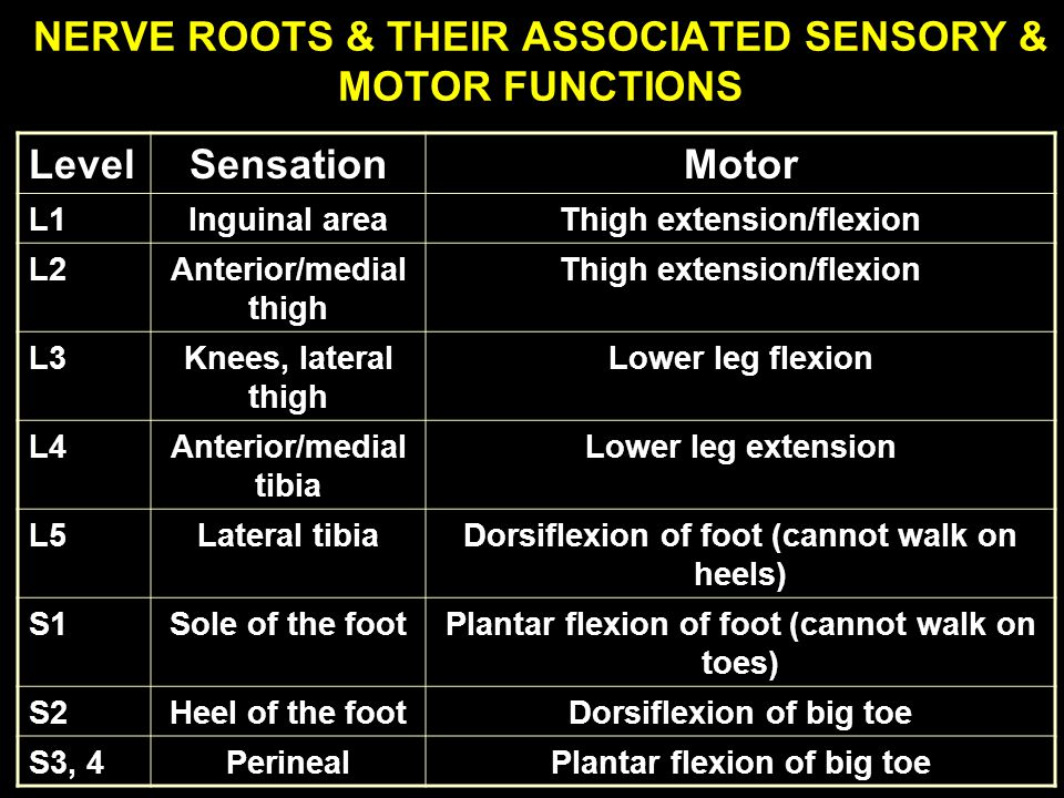 NERVE ROOTS & THEIR ASSOCIATED SENSORY & MOTOR FUNCTIONS