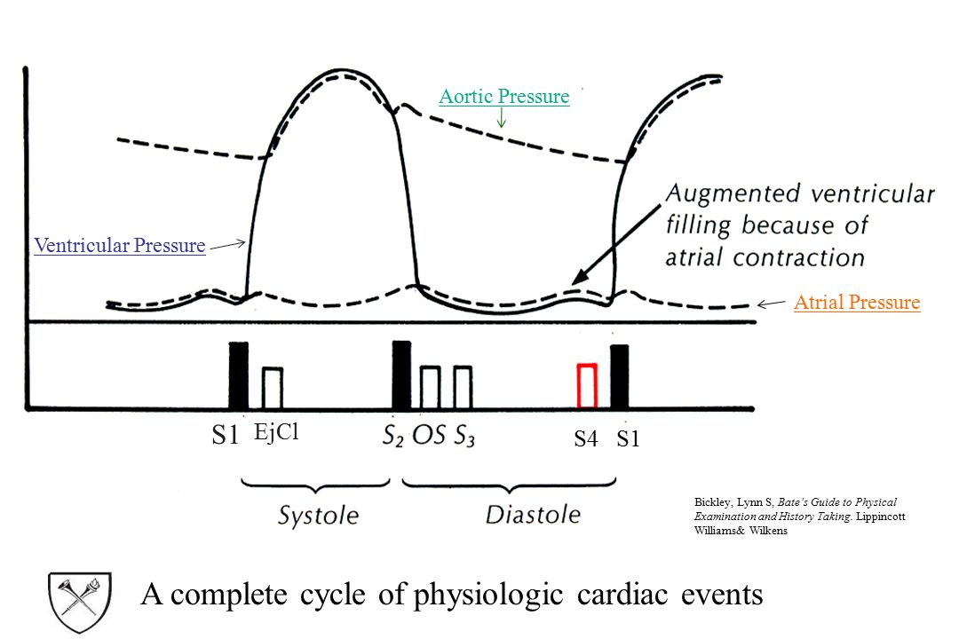 A complete cycle of physiologic cardiac events