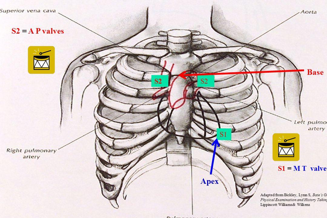 S2 = A P valves Base Apex S2 S2 S1 S1 = M T valves