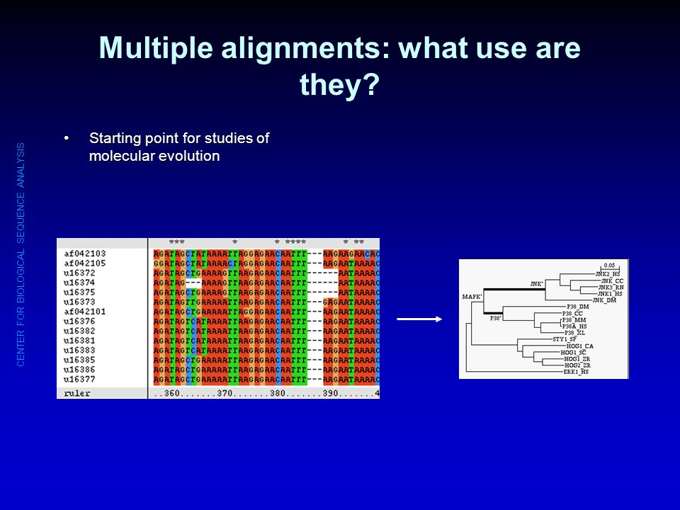 Multiple alignments: what use are they
