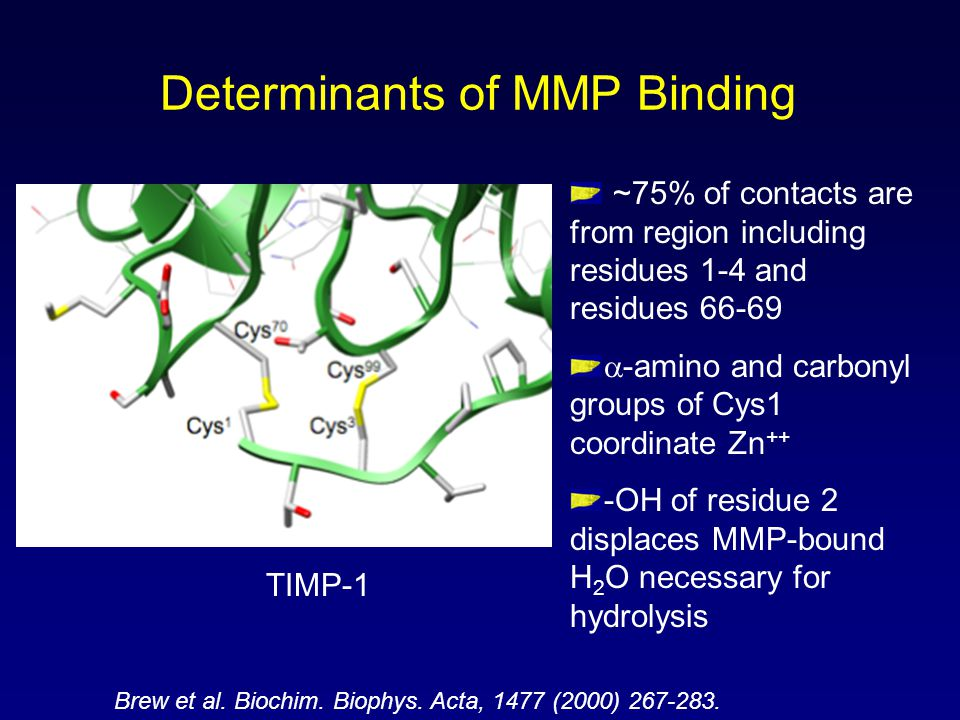 Determinants of MMP Binding