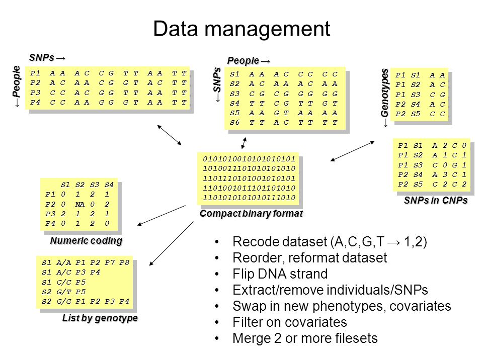 Data management Recode dataset (A,C,G,T → 1,2)