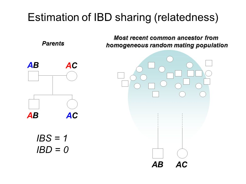 Estimation of IBD sharing (relatedness)