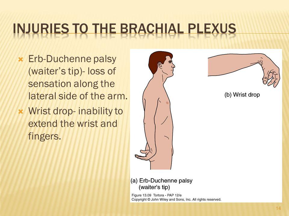 Injuries to the Brachial Plexus