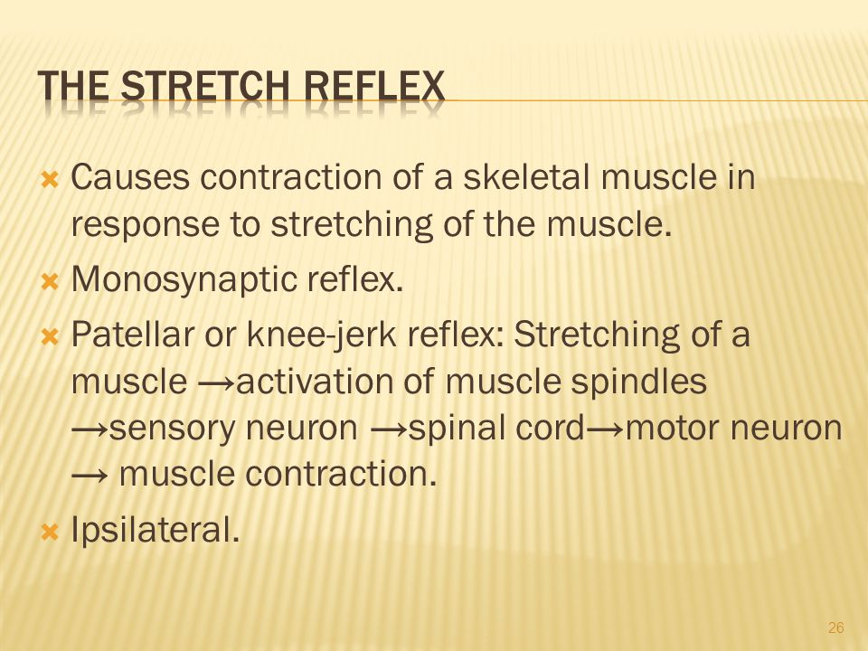 The Stretch Reflex Causes contraction of a skeletal muscle in response to stretching of the muscle.