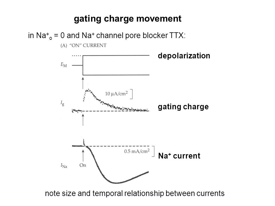 gating charge movement